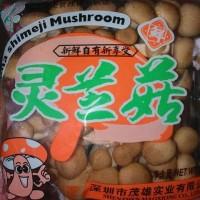 Jamur Shimeji Coklat
