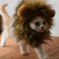 Kostum Baju Hewan Kucing Anjing Model Wig - Rambut Singa topi singa