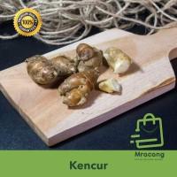 KENCUR / TEMU KENCUR - SAYUR SAYURAN SEGAR