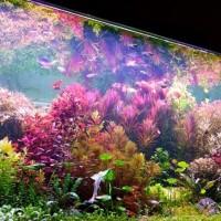 Aquarium Aquascape Full Set Design Ducth Style