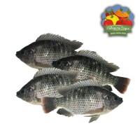 Ikan Mujair Segar - 500 gram