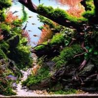 Aquarium Aquascape Full Set Design Jungle Style