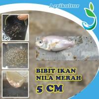 [GOJEK/GRAB] Jirifarm Bibit Ikan Nila Merah Ukuran 5 cm Hidup