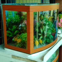 aquarium kaca depan cembung P 38 x L 20 x T 26 Type S Berkualitas
