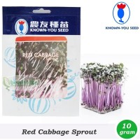 Benih-Bibit Microgreens/Sprout Red Cabbage (Known You Seed)