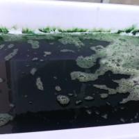 Phytoplankton 300ml Coral Food Pakan Terumbu Karang dr Mikroalga Laut