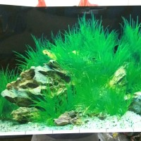 Wallpaper gambar belakang aquarium background aquascape tinggi 50cm