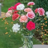 Bibit / Benih Biji Bunga Anyelir - Pink Carnation Isi 30 Biji