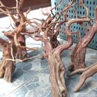 DISKON Aquascape kayu rasamala size L grade A