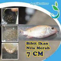 [GOJEK/GRAB] Jirifarm Bibit Ikan Nila Merah Ukuran 7 cm Hidup