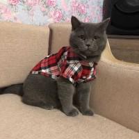 Baju Kemeja Flanel Anjing Kucing Lucu Hewan Kecil Kotak Dog Cat Shirt