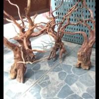 Aquascape kayu rasamala size L grade A PROMO