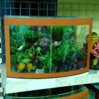 Ada aquarium kaca depan cembung P 38 x L 20 x T 26 Type S