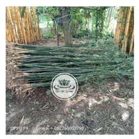 Bambu Kelisik Hijau   Bambu China   Bambu Pagar