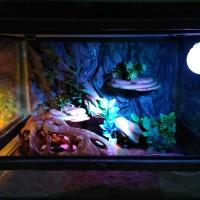 RC-LSL01W Sportlight rainbow lampu hias akuarium terarium reptile ikan