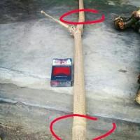 Bambu unik buta tanpa mata ranting 2shaf