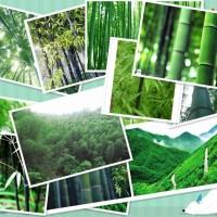 benih bambu campur impor / mix bamboo china seed import isi 5 butir -