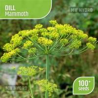 Benih Dill - Mammoth, Seed