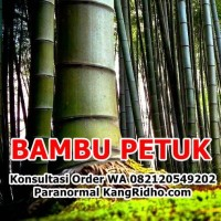 Bambu Petuk Asli Bertuah ketemu ruas berenergi positif