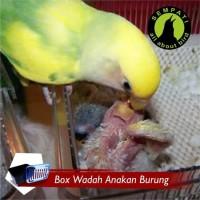 Perlengkapan Hewan BABY BOX WADAH UNTUK ANAKAN BURUNG LOVEBIRD MURAI