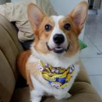 scarf anjing kucing/ bandana anjing/ baju anjing MINIONS