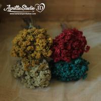 Bunga Adelweis Besar Asli