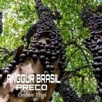 Bibit pohon Buah Anggur Brazil jenis Preco genjah cepet berbuah