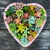 Paket 30 Buah Tanaman Hias Kaktus Sukulen Mini Dekorasi Rumah Cantik