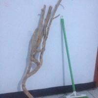 Dijamin antik Bambu lanang / bambu buta