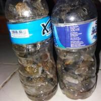 New Bahan Kalimaya Banten Botolan 150 Ml Pasti Nemu Jarong Gan