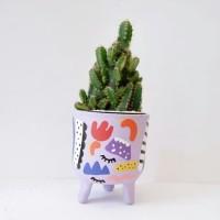 Pot Kaktus Mini Kaki Little Killi