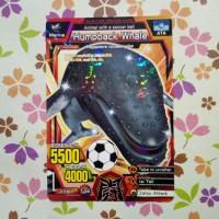 strong animal kaiser normal humpback whale soccer ball s2