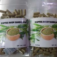 kapsul herbal daun sambiloto pengontroll gula darah isi 100 kapsul