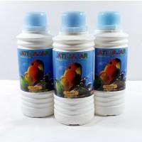 shampo jati jajar untuk membasmi kutu,biru,bakteri
