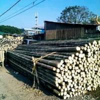 bambu steger murah