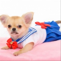 baju sailor moon anjing & kucing size S.M.L