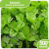 Benih Herbs Rempah Seledri Bawang Daun Ketumbar (Repack) Sleepy Dryad