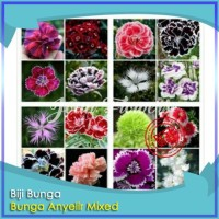 Bibit Tanaman Bunga Carnation Mixed Bunga Anyelir Teluki Benih Bibit