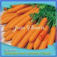 Bibit Tanaman Wortel Baby Carrot Amsterdam 3 Sprint Benih Bibit