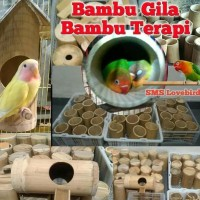 Bambu Setan / Bambu Gila / Bambu Terapi Lovebird