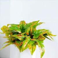 Artificial Arrow head leaves - daun keladi hias imitasi plastik palsu