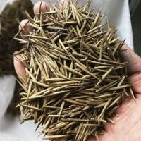 Imatton benih bibit bambu moso Phyllostachys pubescens china raksasa