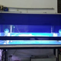 Lampu aquarium LED HIPOWER utk tanning arwana,louhan 100cm/48w