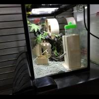Big Sale Terarium Kandang Hamster Medium , Jungle Theme Aquarium