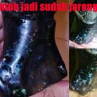 Black Opal Banten Bibit Jarong Bahan Ukuran Besar Plus Cara