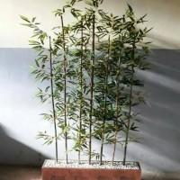 Partisi Bambu/Pembatas Ruangan/Tanaman Hias/Dekorasi Indiratuppu