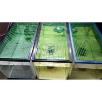 Kawat Mesh Grill Hijau Plastik Pembatas Ikan Sekat Aquarium