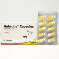 Obat antibiotik kucing anjing