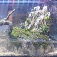 Paludarium / Aquascape Kura Kura Fullset Jadi Jingxion89 Wulandari_122