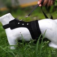 baju harnes musang kucing dan otter berkualitas
